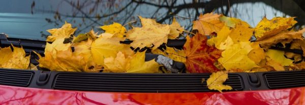 Fall Car Service